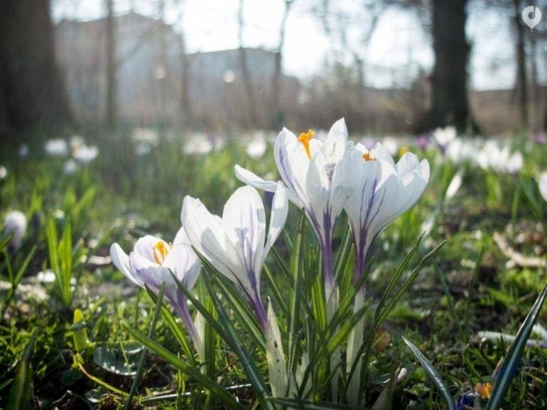 Frühling am Weißen See