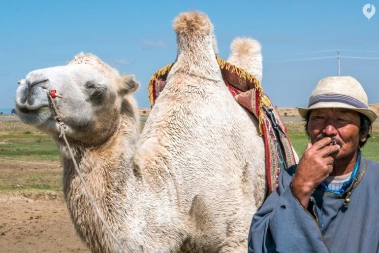Mongolei: Der Mann und sein Kamel