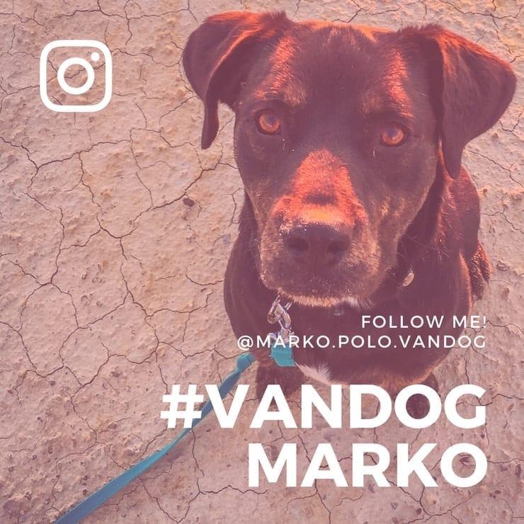VanDog Marko bei Instagram