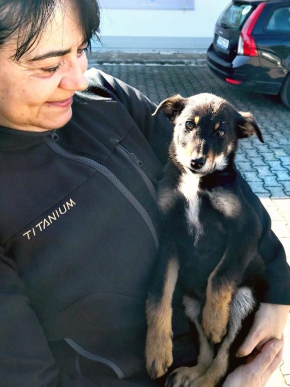 Straßenhunde in Griechenland