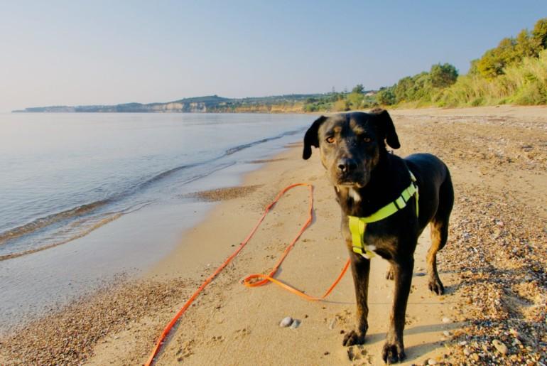 Strandspaziergang mit Marko