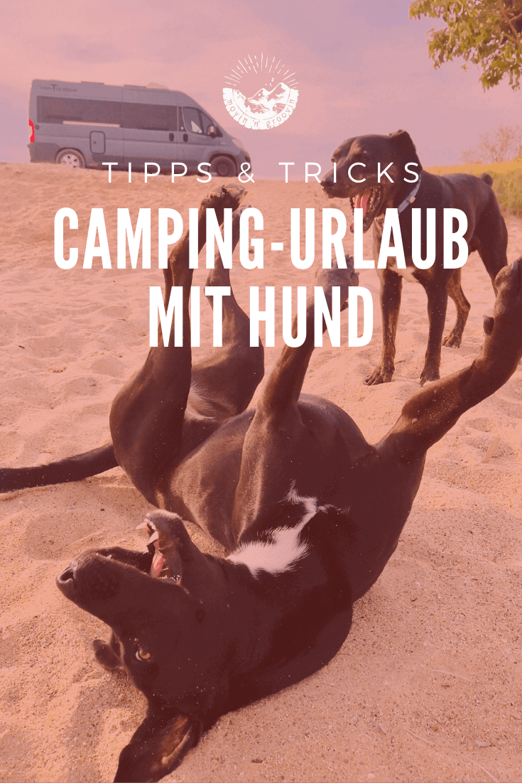 Camping-Urlaub mit Hund